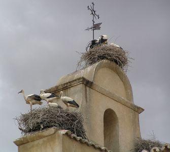 1024px-ciconia_ciconia_-iglesia_de_san_isidoro_ciguenas_en_el_campanario_salamanca_spain-18june2006