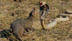 depredadores-de-las-serpientes