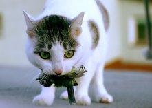 gato_cazando