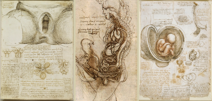 leonardo-reproduccion-humana