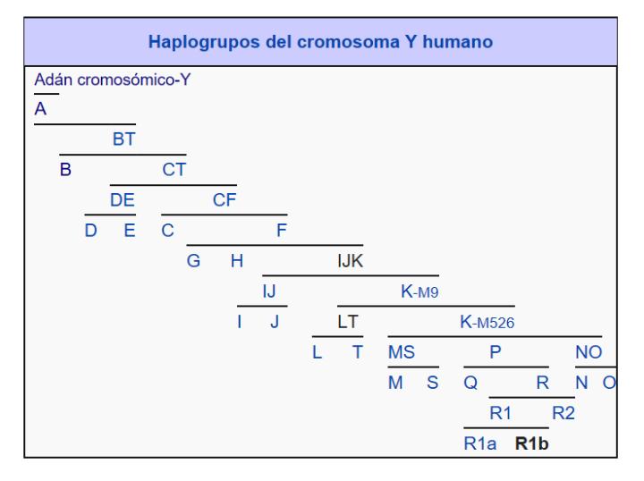 haplogrupos_cromosoma_Y